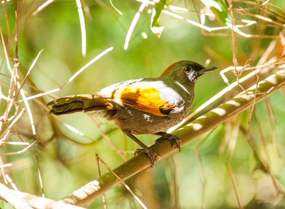 birds-of-vietnam-the-most-wanted-species-of-all-birders-around-the-world