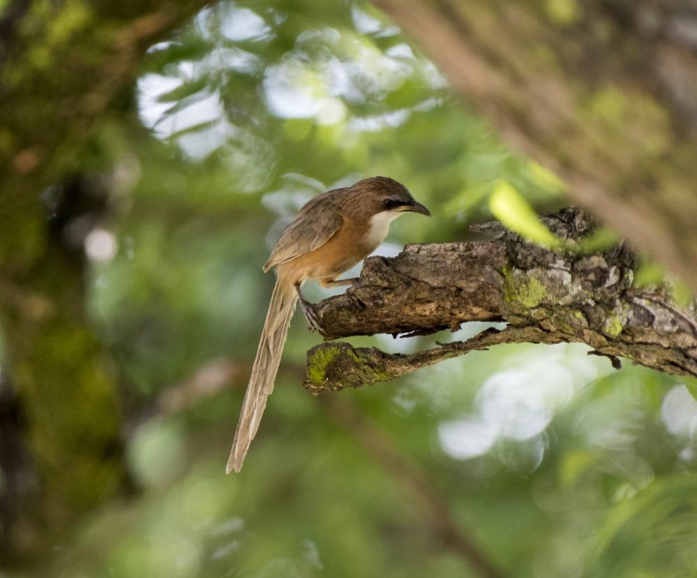 birds-in-myanmar