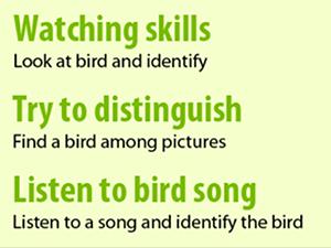 bird-quiz-way-to-get-familiar-with-vietnamese-birds