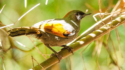 Central Highland and Southern of Vietnam (Vietnamese Endemism)