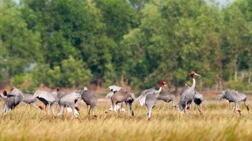 Birding – Bird photography & Cultures in the Southern Vietnam and Cambodia